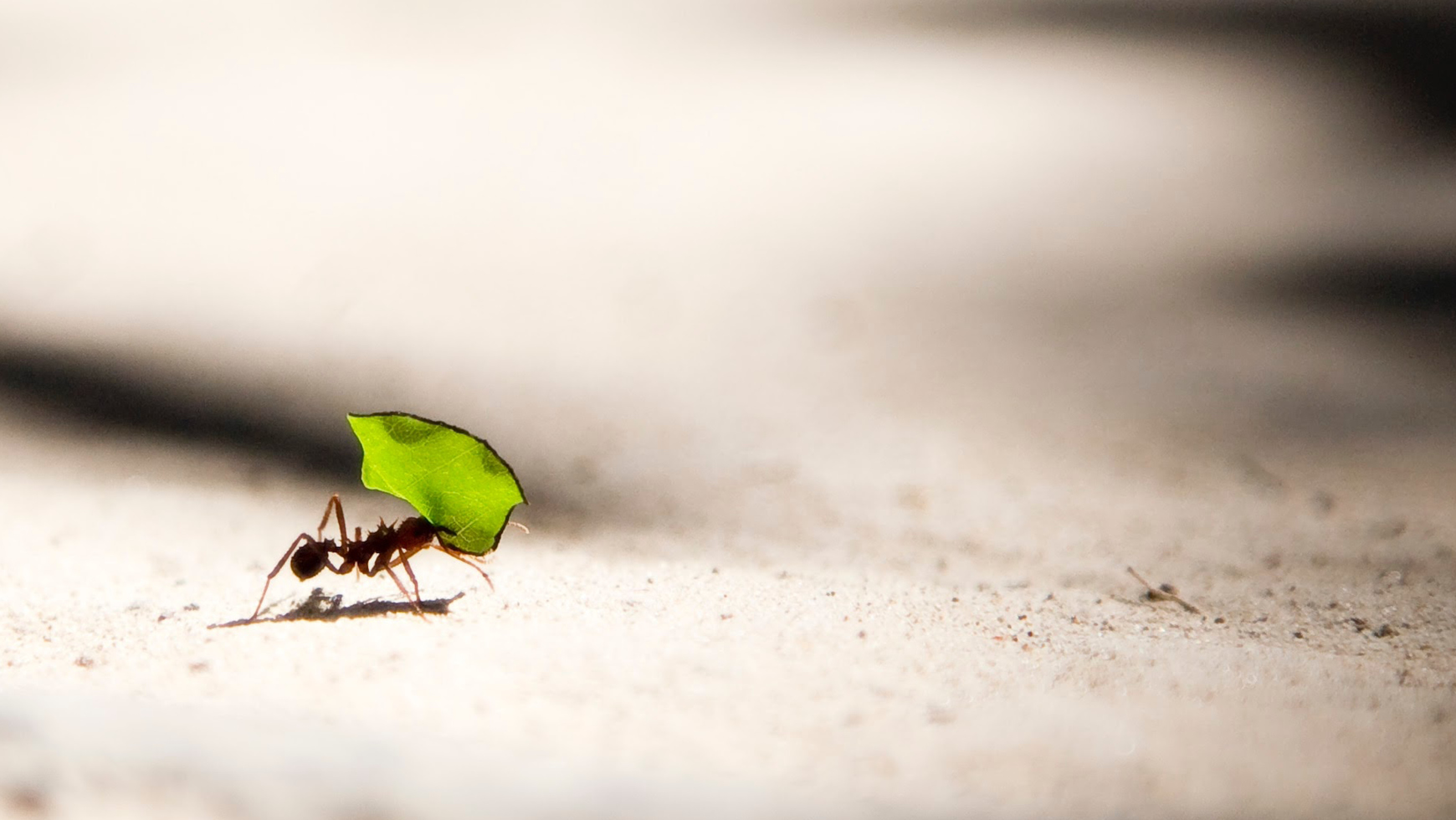 How to Pinpoint Sales Cycle Strengths with Process Mining Ant