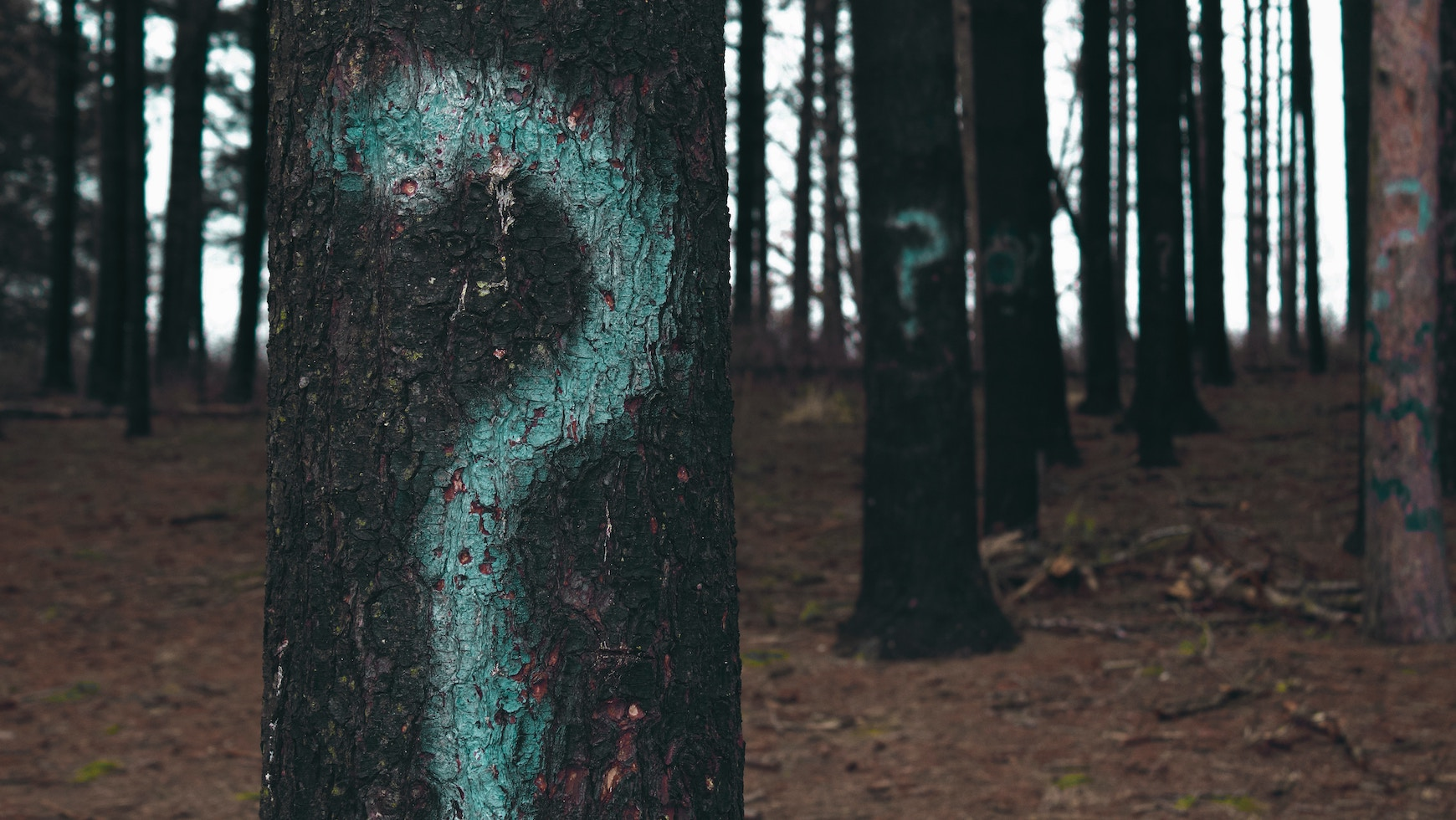 7 Questions to Identify Processes that Should be Bot-Free Trees